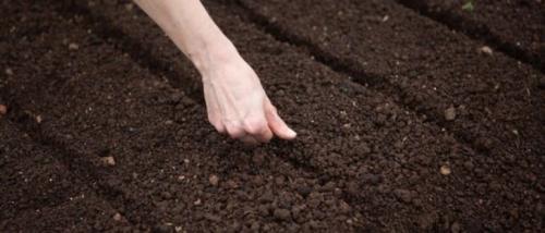 Что посадить на даче осенью. Посадка культур под зиму, что лучше посадить осенью на огороде