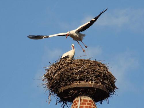 Гнездо для аиста. Как сделать гнездо для аистов своими руками