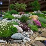 Мы подбираем растения для альпийской Горки.