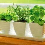 Мы устроим ароматный мини - огород на подоконнике.