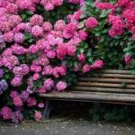 Кустарники, цветущие все лето.