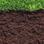 Уникальные способы проверки почвы.