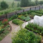 Удачное соседство и как на маленьком участке вырастить большой и разнообразный урожай.
