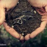 Мы пропариваем почву правильно.