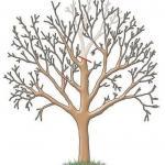 Обрезка садовых деревьев.