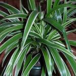 Четыре комнатных растения, которые должны быть в каждой квартире.