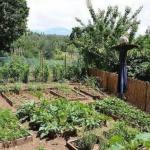 Народные приметы для садоводов и огородников.