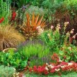 43 вида самых декоративных многолетних цветов.