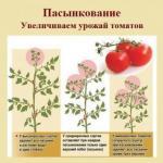 Пасынкование: секрет урожайности томатов.