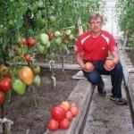 Все что нужно знать о томатах!