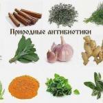 Природные антибиотики.   1. хрен.