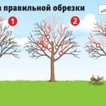 Как вернуть деревьям былую силу.