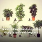 Комнатные растения, очищающие воздух.