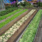 Чередование посевов.  Растения друг друга от болезней и вредителей защищают.