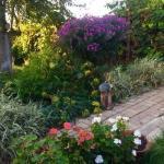 Всем привет!  Мой сад находится в курской области в городе Железногорск - жемчужине курской магнитной аномалии.