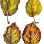 Чем опасен дефицит или избыток азота для растений?