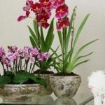 Как приручить строптивую орхидею!