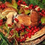 В Петербурге хотят восстановить заготпункты, куда жители смогут сдавать грибы и ягоды.