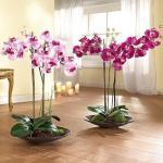 Орхидея фаленопсис: как ухаживать круглый год.