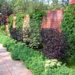 Вертикальное озеленение.  Вертикальное озеленение - очень популярная техника в ландшафтном дизайне.