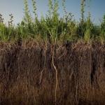 Как сделать почву более плодородной?