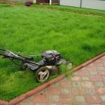 Как посеять газонную траву правильно.