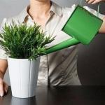 10 причин, по которым гибнут цветы в доме.