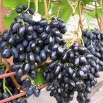 Как правильно формировать виноград для большого урожая!