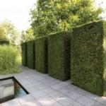 12 советов по выбору растений для живой изгороди.