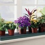 Какие комнатные цветы стоит заводить дома?