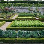 Зеленая аптека для растений против вредителей и болезней.